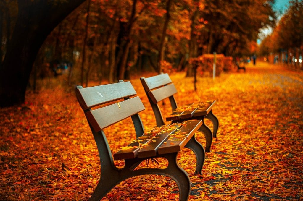 fall-bench-main